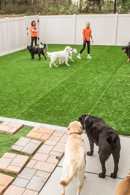 Barks Dog Daycare Dog Daycare Dogs Outdoor Dog