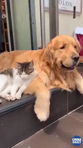 Cutest Beautiful friendship between dog and cat and Differences Between Pet Cats And Dogs  #cat #dog #pets #catlover #doglover #catmemes If You like, save 👍 follow for more funny video ❤