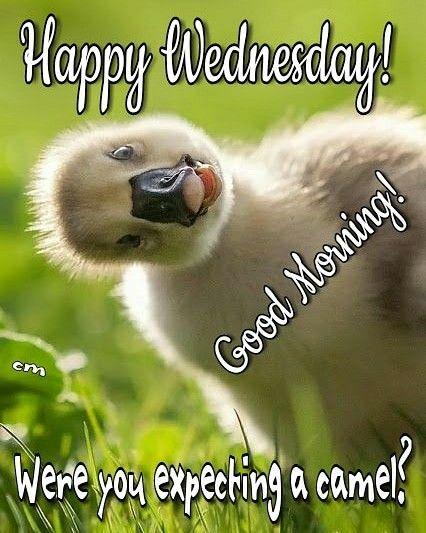 Wednesday Morning Funny : wednesday, morning, funny, Liden, Wednesday, Quotes, Happy, Wednesday,, Morning, Humor,, Greetings
