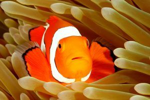 If You Are Looking For Saltwater Fish For Sale Or Simply Searching For Your Nearest Tropical Fish St Saltwater Fish For Sale Tropical Fish Store Fish For Sale