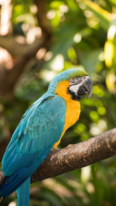 The Latest Iphone11 Iphone11 Pro Iphone 11 Pro Max Mobile Phone Hd Wallpapers Free Download Macaw Parrot Bird Colorful Tropic Birds Images Animals Birds Beautiful birds hd wallpaper free