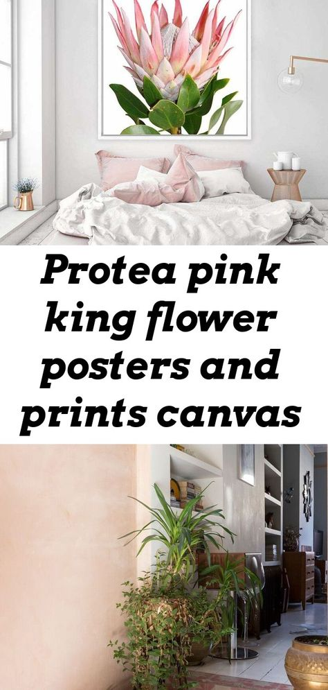 Protea pink king flower posters and prints canvas painting south africa wall art pictures paintings