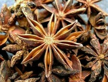 Herbescience فوائد اليانسون النجمي يعتبر اليانسون النجمي من ا Indian Spices Star Anise Spices