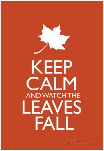 Keep Calm and Watch the Leaves Fall Poster Photo Keep Calm and Watch the Leaves Poster Poster Keep Calm Quotes, Fall Wallpaper, Fall Pictures, Fall Images, Happy Fall Y'all, Fall Nail Designs, Hello Autumn, Autumn Inspiration, Autumn Ideas