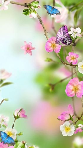 Download Natural Flowers Livewallpaper For Android Natural