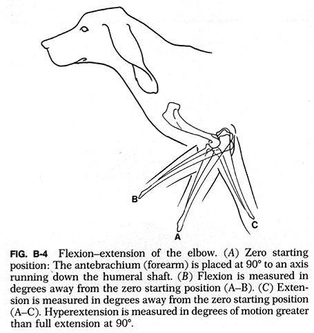 canine range of motion - Google Search   Rehab   Pinterest   Animal ...