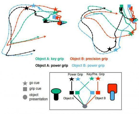 Researchers Begin To Hone Cybernetics By Mapping Grip Pressure Variance In The Brain How To Plan Brain How To Apply