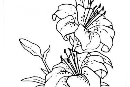 Dibujos Para Colorear Flores Bonitas A4 Biblioteca De Imagenes