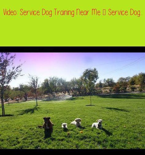 Service Dog Training Near Me Service Dog Puppy Trainingservice