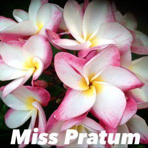 Growing Plumeria Frangipani Indoors In Containers Part2 5 In 2020 Frangipani Plumeria Flowers