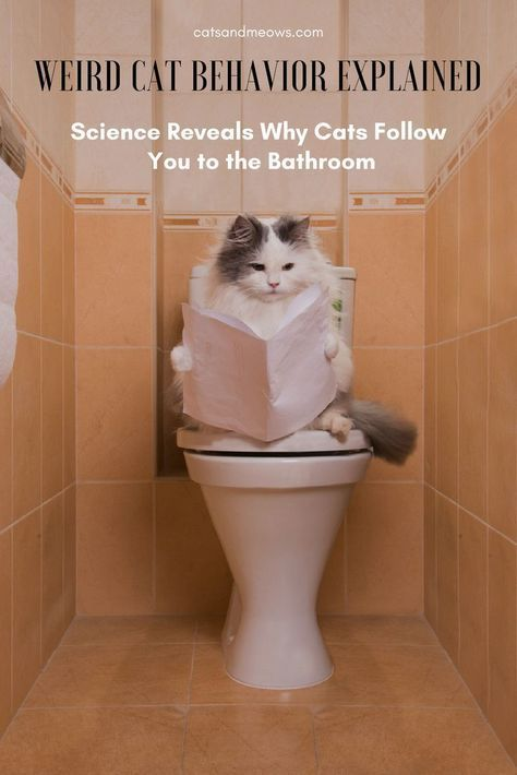 Weird Cat Behavior Explained Science Reveals Why Cats Follow You To The Bathroom Cat Behavior Crazy Cats Cat Facts