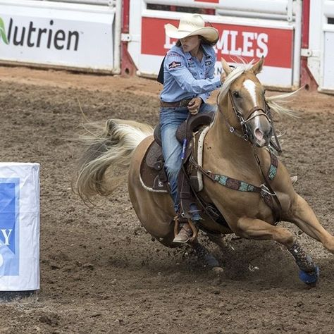 Hailey Kinsel and DM Sissy Hayday do it again winning their fourth round at the Calgary Stampede Barrel Racing Quotes, Barrel Racing Tips, Barrel Racing Saddles, Barrel Racing Horses, Barrel Horse, Cute Horses, Beautiful Horses, Horse Riding Quotes, Western Pleasure Horses