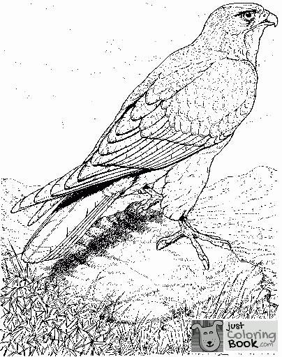 Real Life Looking Coloring Pages Of Detailed Hawk Bird Coloring With Hawk Bird Coloring Pages Bird Coloring Pages Animal Coloring Pages Bird Drawings