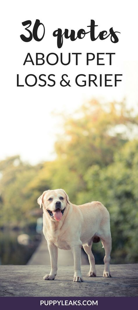 30 Quotes About Losing A Dog Dealing With Grief Pet Quotes Dog