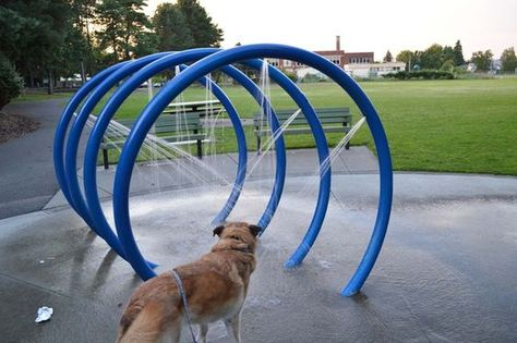Pin By Elma Roux On Dog Restaurant Dog Park Dog Playground