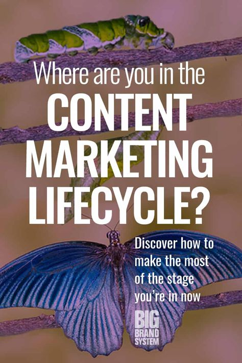 The Content Marketing Lifecycle: What to Expect as Your Website Grows