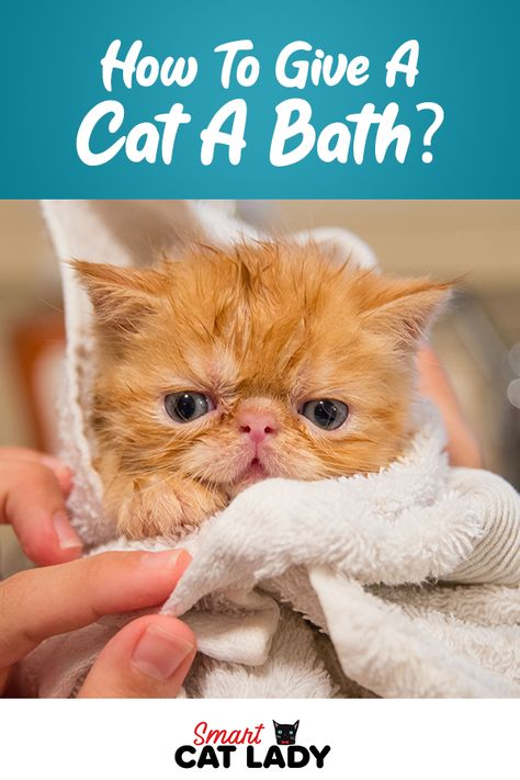 How To Give A Cat A Bath In 2020 Cats Cat Shampoo Mutt Dog