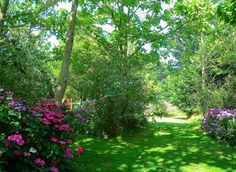 Massif fleuri à l\'ombre des arbres | Type de sol, Types de et Les arbres