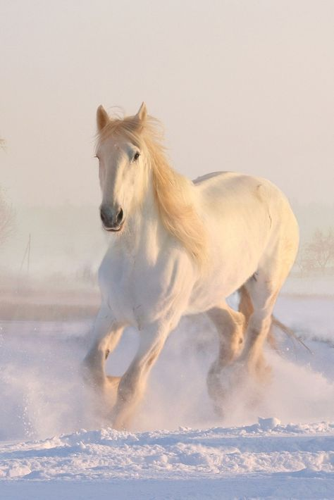 A Beautiful White Horse In The Snow Cute Horse Cuteanimals Theworldisgreat Horse Wallpaper Horses In Snow Horses