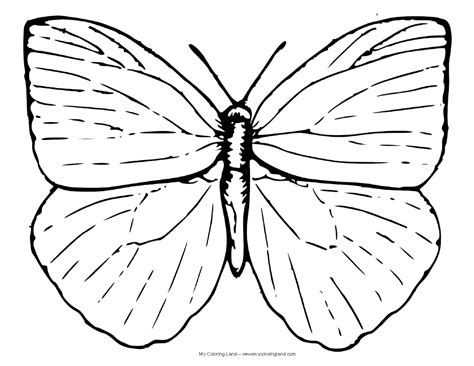 Pin By Bibaxu Coloring Pages On Coloring Pages Bibaxu Butterfly