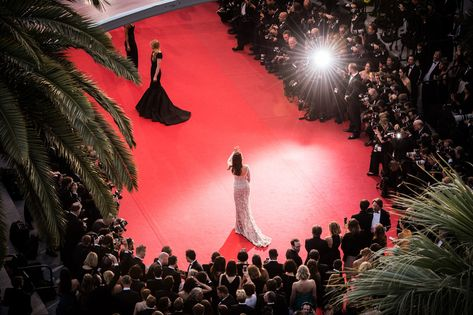 Celebrities and models attend red carpet movie premieres, where hundreds of papa. - Celebrity Style Week: Celebrity Style Fashion and Latest Trends Cannes Film Festival 2015, Hollywood Red Carpet, Hollywood Life, Glitzy Glam, Cinema, Future Career, Dream Life, Dream Job, Red Carpet Looks