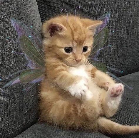 Cute Baby Cats, Cute Little Animals, Cute Cats And Kittens, Cute Funny Animals, Kittens Cutest, Cats In Love, Adorable Baby Animals, Kittens Meowing, Funny Kittens