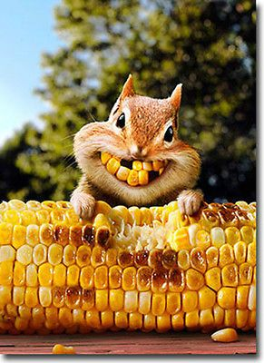 Corny squirrel bright smiles for Thanksgiving Baby Animals, Funny Animals, Cute Animals, Smiling Animals, Green Animals, Dental Humor, Seriously Funny, Tier Fotos, Chipmunks