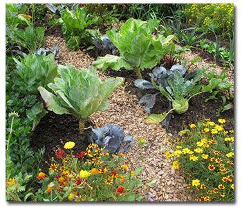 Exceptionnel Vegetables Flowers | Garden U0026 Yard Ideas | Pinterest | Yard Ideas, Plants  And Gardens