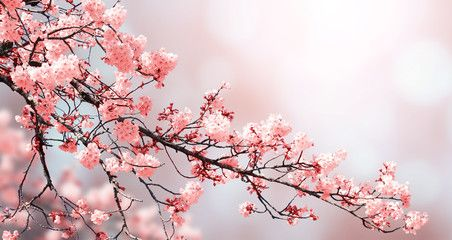 Beautiful Nature Spring Background With Sakura Flowers Ad Spring Nature Beautiful Flowers In 2020 Beautiful Nature Spring Beautiful Nature Spring Background