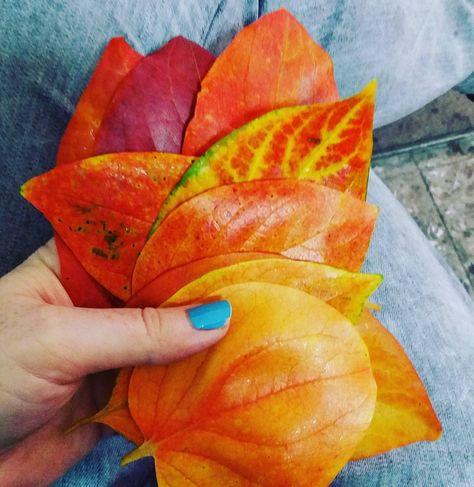 foglie #leaf #autumn #loveautumn...