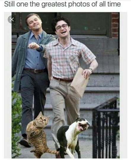 Trendy Katzen Lustig Lachen So Schwer Tolle Ideen Cats Cats Ideen Katzen Lachen Lustig Schwer Tolle Trendy Katze Lustig Lustig Lachen