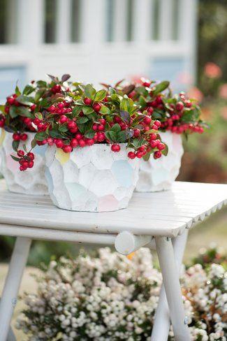 Gartenpflanze Des Monats November Die Scheinbeere Winterpflanzen Gartenpflanzen Blumen Im Blumentopf