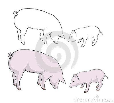 Two Pigs Pig And Piglet Are Eating Silhouette Vector Illustration Vector Illustration Illustration Vector