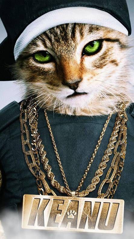 Swag Cat Cat Wallpaper Cute Cat Memes Cute Baby Cats