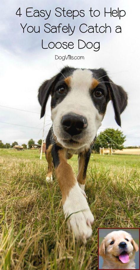 Dog Behavior Rehabilitation Mn And Dog Training Courses Near Me