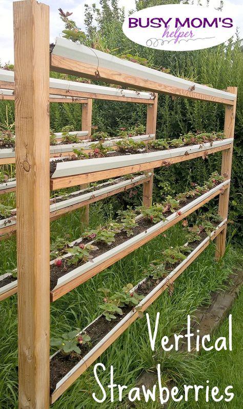 Vertical Strawberries by Nikki Christiansen for Busy Mom s Helper Raised Vegetable Gardens, Vegetable Garden Design, Raised Garden Beds, Raised Beds, Vegetable Gardening, Strawberry Beds, Strawberry Planters, Strawberry Garden, Gutter Garden