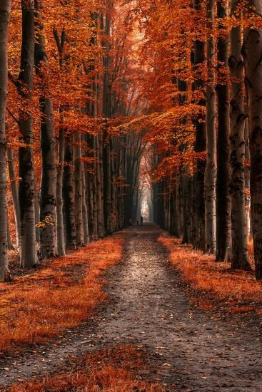 2 To 1 To 3 Photographic Print By Lars Van De Goor In 2020 Landscape Pictures Nature Photography Autumn Scenery