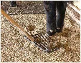 The Scoop On Wood Pelleted Bedding Horse Bedding Wood Pellets Natural Cat Litter