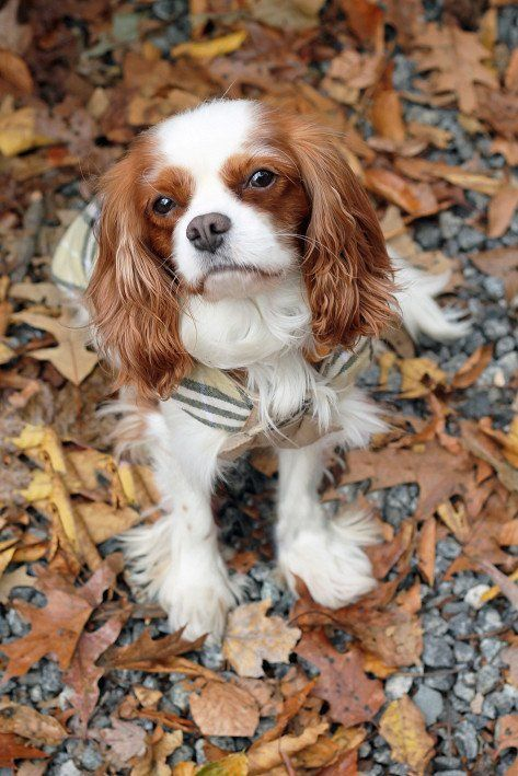 Our Very On Lexie Is Up For Washingtonian S Cutest Dog In