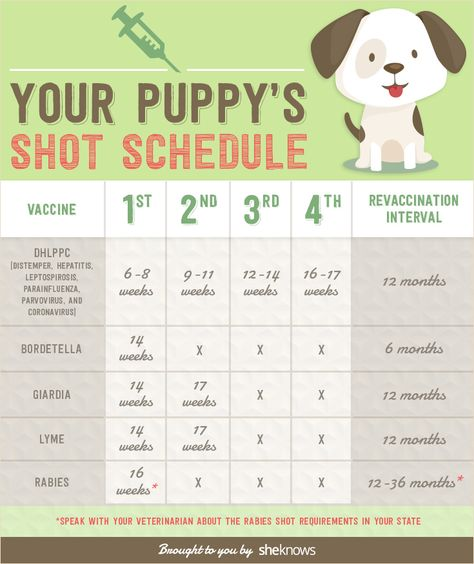 A complete list of all the vaccinations your puppy needs and when it needs them