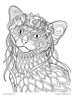 Omeletozeu Oriental Shorthair Cats Cat Silhouette Oriental