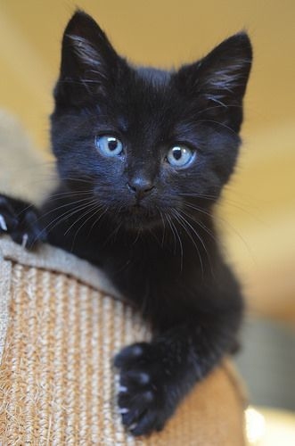 Small Dark And Handsome 3 Kittens Cutest Cute Cats Pretty Cats