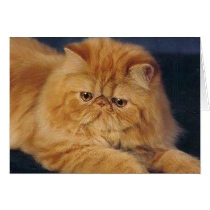 Perfect Ginger Cat Zazzle Com Most Popular Cat Breeds Orange