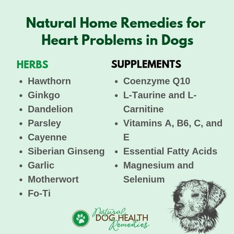 Dog Heart Problems