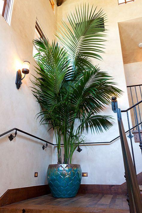 Kentia Palm on landing