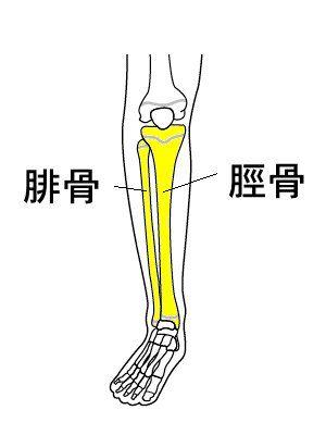 神経 麻痺 脛骨