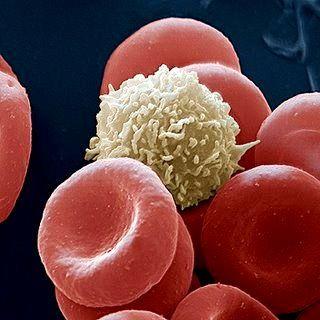 Globulo Blanco Y Globulos Rojos Microscopio Ciencias De La Naturaleza Fotografía Microscópica