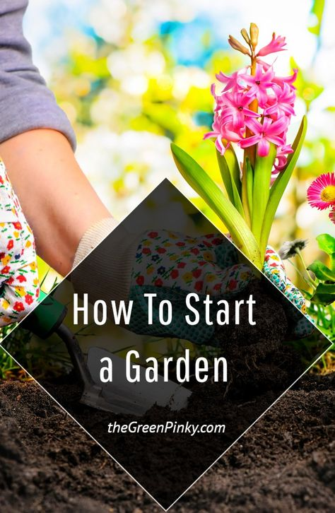 Starting a Garden is Exciting and Not Too Difficult. A Little Bit of Planning Can Go a Long Way. Set Yourself Up for Success #StartingaGarden #GardeningforBeginners #Gardening #Garden #VegetableGarden #FruitGarden #GardeningBeginner #GardeningNewbie