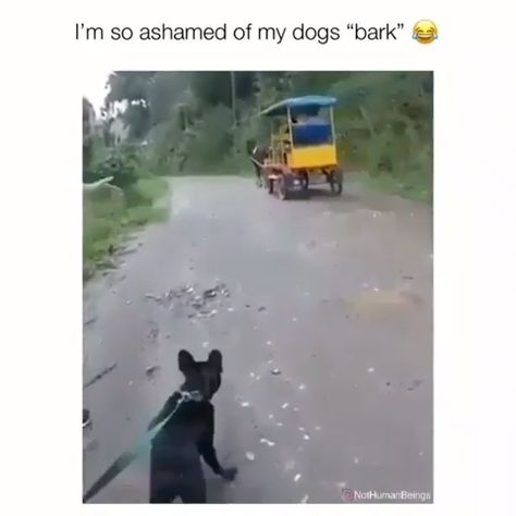 Omg I'm cryin' right now 😂😂😂... | Funny Video Posts | Hilarious Video Memes | Funny So True Videos | Funny Videos For Adults | Laugh So Hard Videos | #FunnyVideos #HumorVideos #MemesVideos #NoChill #InstagramVideos #InstaViews #Instagram #Videos #YouTubeVideos #YouTube #CutenessOverload #CuteAnimals #CutePuppies #CutePuppy #Pokemon #ViralVideos #WhySoSerious #ViralMindz | (Affiliate Link Included)