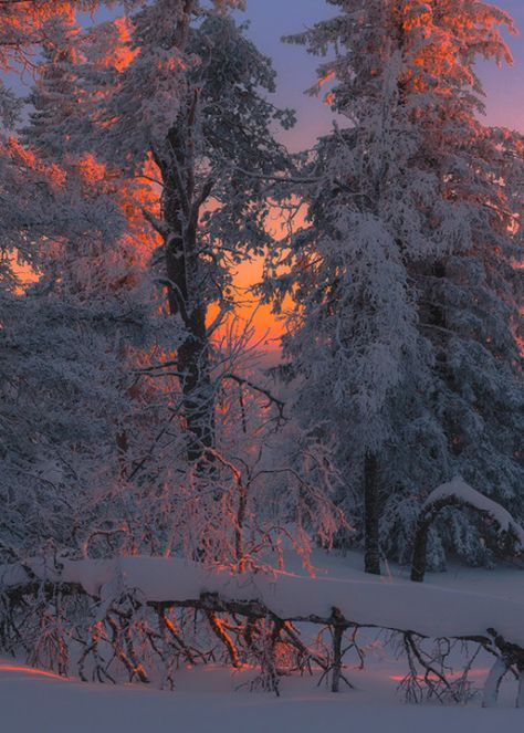 notes of winter -- Photo by Marat Akhmetvaleev (that beautiful, magical light, like a Maxfield Parrish painting).Sonorous notes of winter -- Photo by Marat Akhmetvaleev (that beautiful, magical light, like a Maxfield Parrish painting). Winter Magic, Winter Snow, Winter Photography, Nature Photography, Foto Picture, Winter Scenery, Winter Sunset, Snow Scenes, All Nature